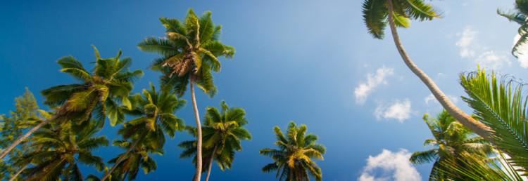 La Digue Palm trees, Seychelles
