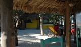 Strandliv vid mexikanska golfen