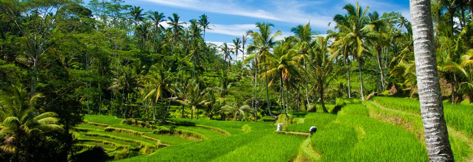Rice Fields, Gunung Kawi in Ubud, Bali
