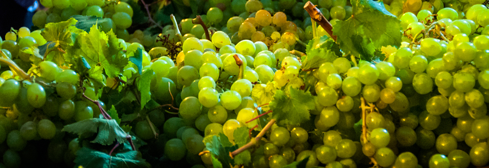 Header_Spain_Aug-Sept-Uvas-2013