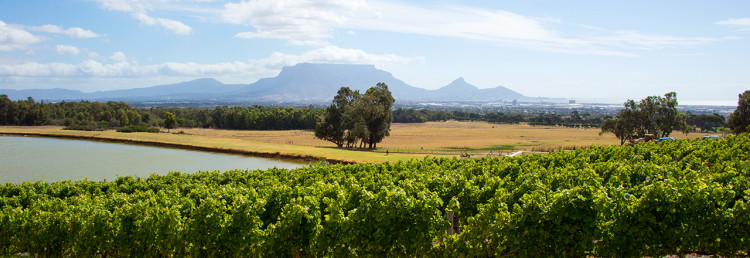 Fantastiska landskap - De Grendel Wine Estate and Restaurant
