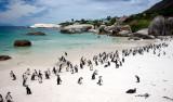 Pingviner och Camps Bay