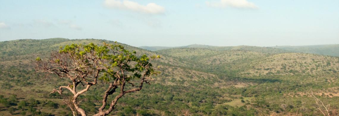 Vi njuter av vacker natur och mäktiga landskap under alla våra turer i jakt på vilda djur, Mavela Game Lodge