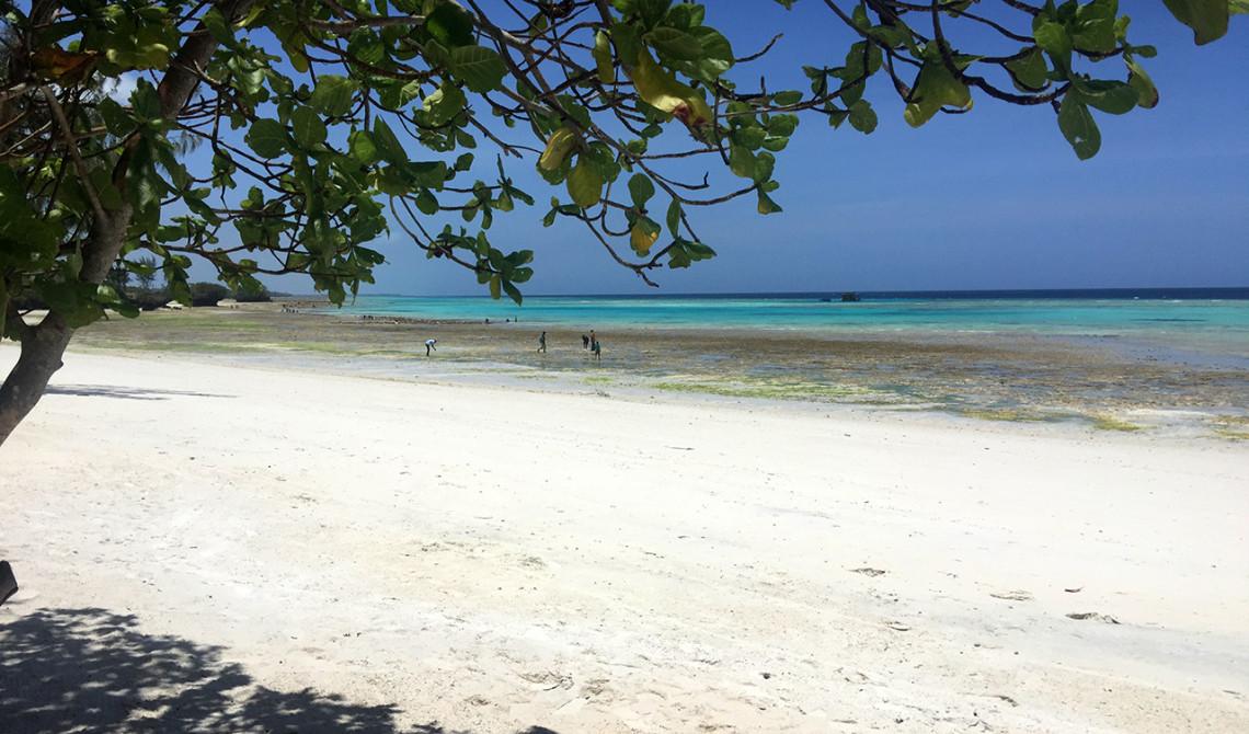 Förmiddag på stranden