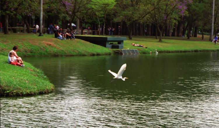 Parque Ibirapuera, São Paulo Brazil