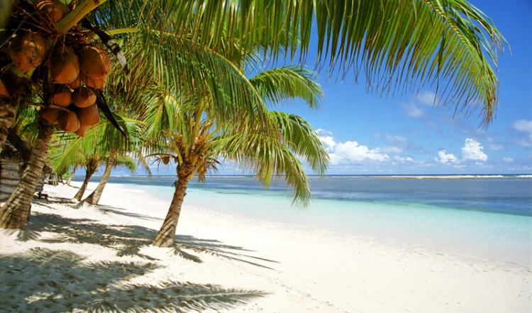 Palmbladen svajjar över den vackra Manase stranden, Samoa