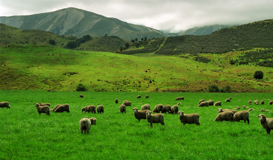 Vy längs Great Alpine Highway, New Zeeland