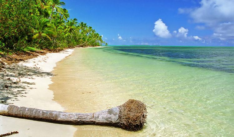 Palmrot ligger över stranden, söder om Felemea by i Uiha, Tonga
