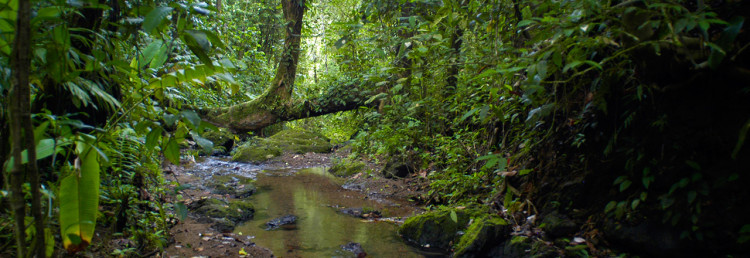Bäck i Corcovado Nationalpark, Costa Rica