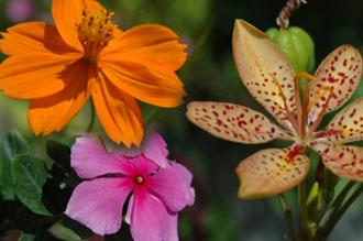 Blommor från trädgården på Vista de Mar