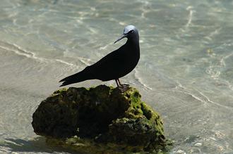 Fågel på sten vid strandkanten