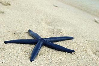 Sjöstjärna på stranden.