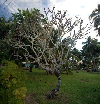 Träd som blomman växer på