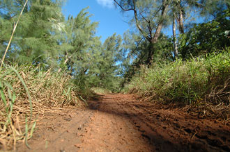 Lerig väg - Atiu, Cook öarna