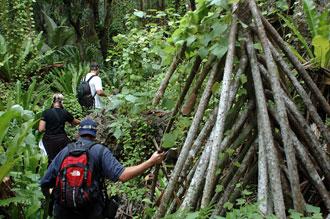 Skog - Atiu, Cook öarna