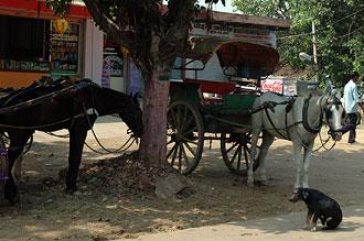 Hästar och hundar vid gatan