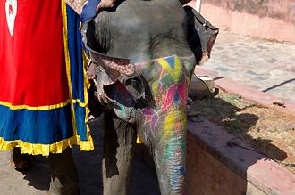 Upp till fortet tar vi oss på elefantrygg
