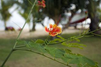 Blomma, Koh Mak