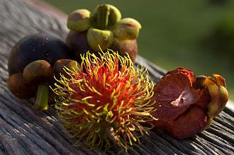 Exotiska frukter