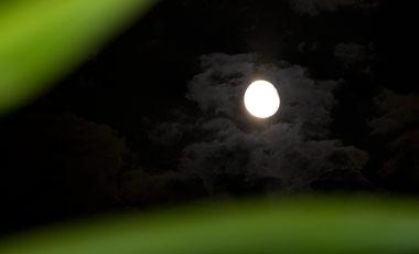 Måne sett mellan palmblad