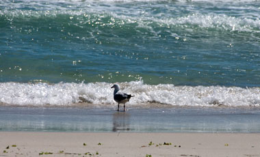 sorrento beach, Perth