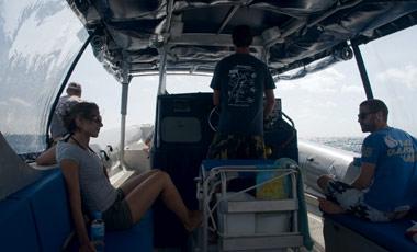 Ocean Safari Tour