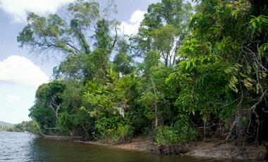 Daintree river Wildlife Cruise