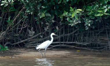 Häger, Daintree river Wildlife Cruise