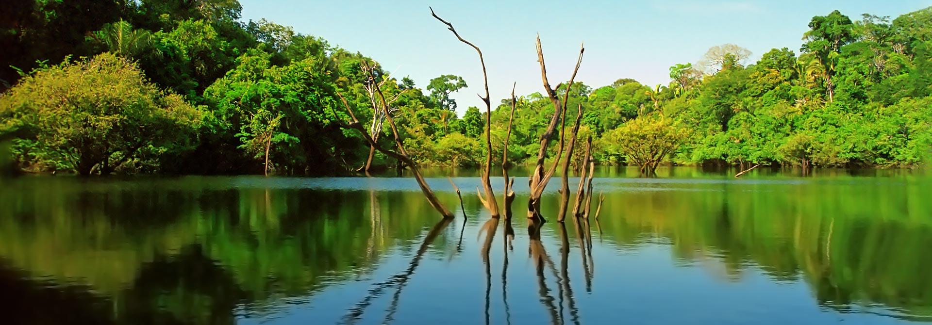 In the Amazon, Brazil
