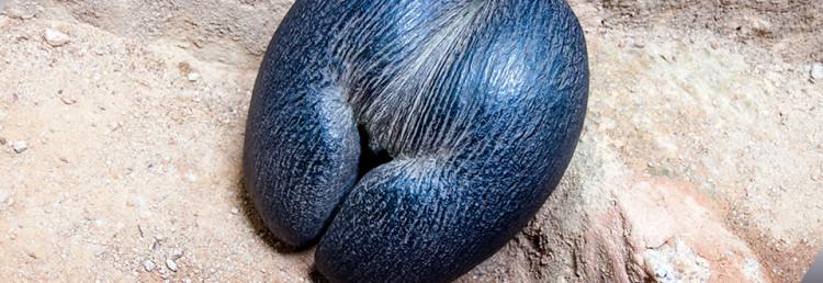 Praslin, den unika dubbelnöten på Seychellerna