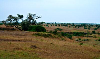 Gryning vid Masai Mara, Kenya
