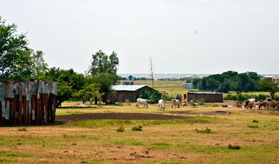 Boskap och byggnader i Masai Mara, Kenya