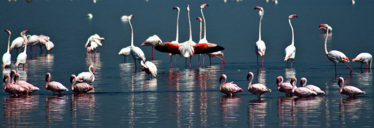 Lake Nakuru Flamingos, Kenya