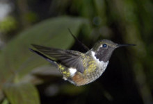 Kollibri, Costa Rica