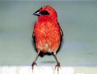 Fågel på ett regnigt La Digue, Seychellerna