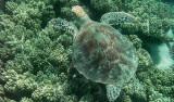 Sköldpaddor och krokodiler