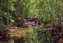 Shady Creek i Litchfield National Park, Northern Territory
