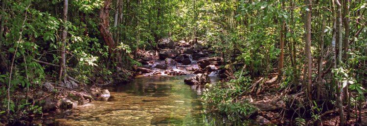 Shady Creek i Litchfield National Park, Northern Territory