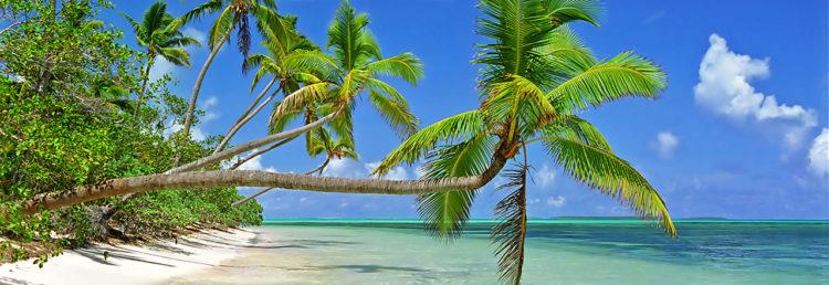 Palmer svajar sakta över det azur vatten, Uiha Tonga
