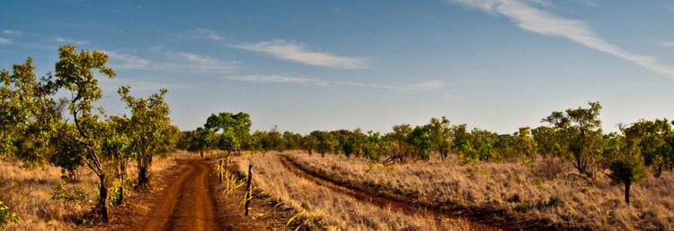 Under Safari i Kenya, från Meru via Lake Nakuru till Masai Mara