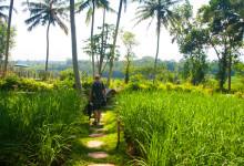 Ankomst till Bambu Indah, Ubud Bali