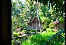 Utsikt från en fönsterlucka på Padi House, Bambu Indah Ubud