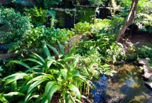 Grönska och vattendrag vid Bambu Indah, Ubud Bali