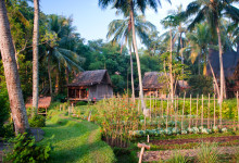 En trädgård bland palmer och risodlingar, Bambu Indah Ubud