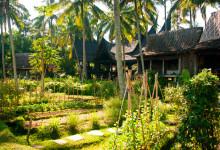 Odlingar i trädgården till Bambu Indah, Ubud Bali