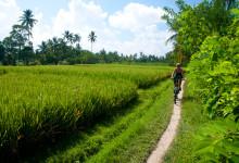 Anki cyklar längs vackra risfält i Tukad Ubud, Bali