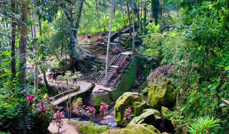 Dalgång med vattendrag och stort träd i Goa Gajah, Elefant grottan i Ubud, Bali