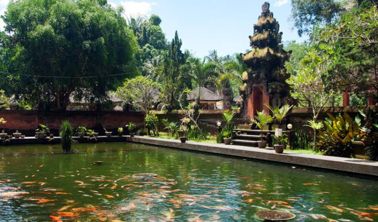 En stor damm med fiskar, Pura Tirtha Empul, Bali