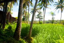 Grönska vid Bambu Indah, Ubud Bali