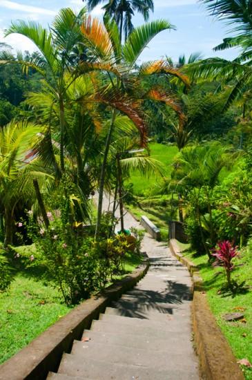 Trappor ner mot Gunung Kawi Tempel, Tampaksiring